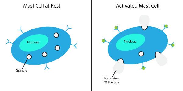 Mast Cell Diagram