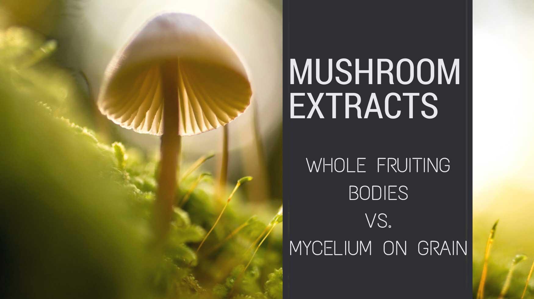 Mushroom Extracts: Whole Fruiting Bodies vs. Mycelium on Grain