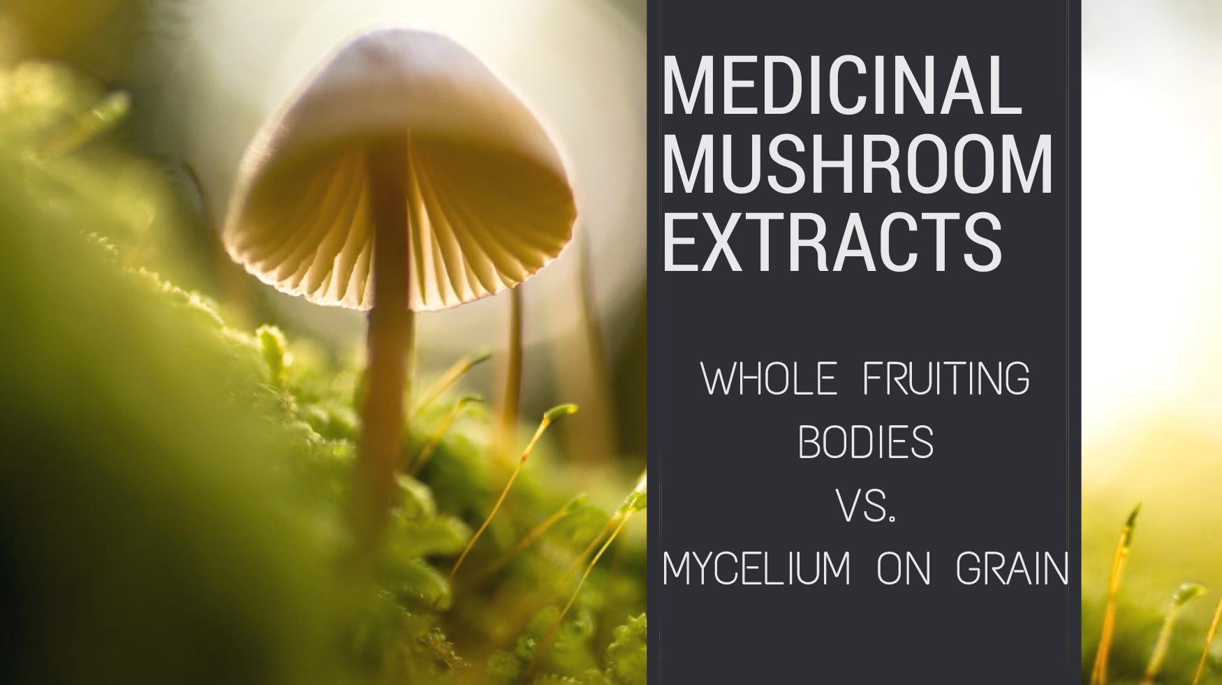 Medicinal Mushroom Extracts