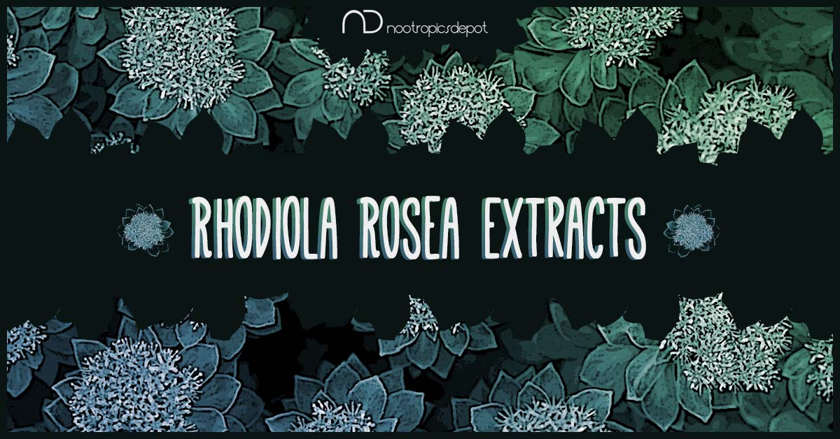 Rhodiola rosea Extract Comparison: Rosavins vs. Salidroside