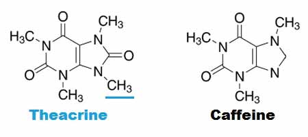 Theacrine vs Caffeine