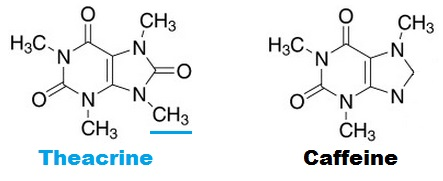theacrine-vs-caffeine.jpg