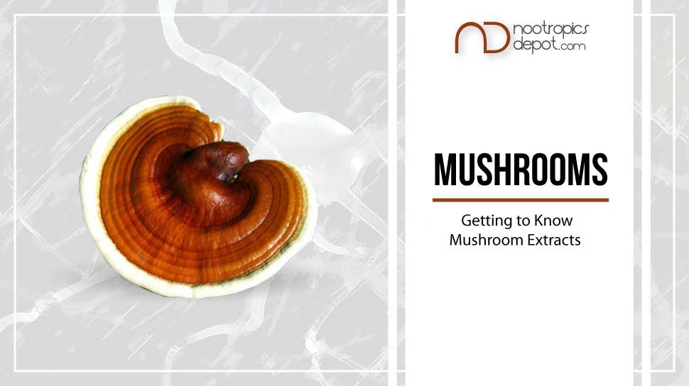 Ultimate Guide to Nootropics - Getting to Know Popular Mushroom Extracts