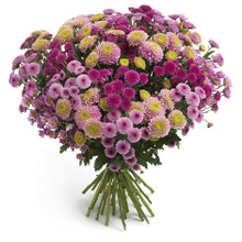 Chrysanthemums in Sweden for delivery anywhere.
