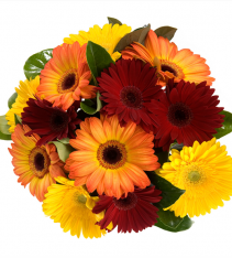 Mixed colors daisy gerberas bouquet arranged by local florists in Sweden.