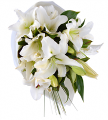 Open full lilies white blooms Sweden.