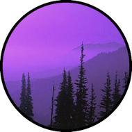 Pine Tree Mist Purple BR