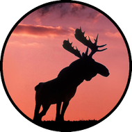 Sunset Moose BR
