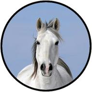 White Horse BR