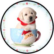 Pup in Santa Cup BR