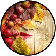 Fall Apple Border BR