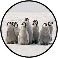 Penguin Colony BR