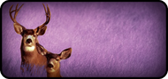 Oh Deer Purple