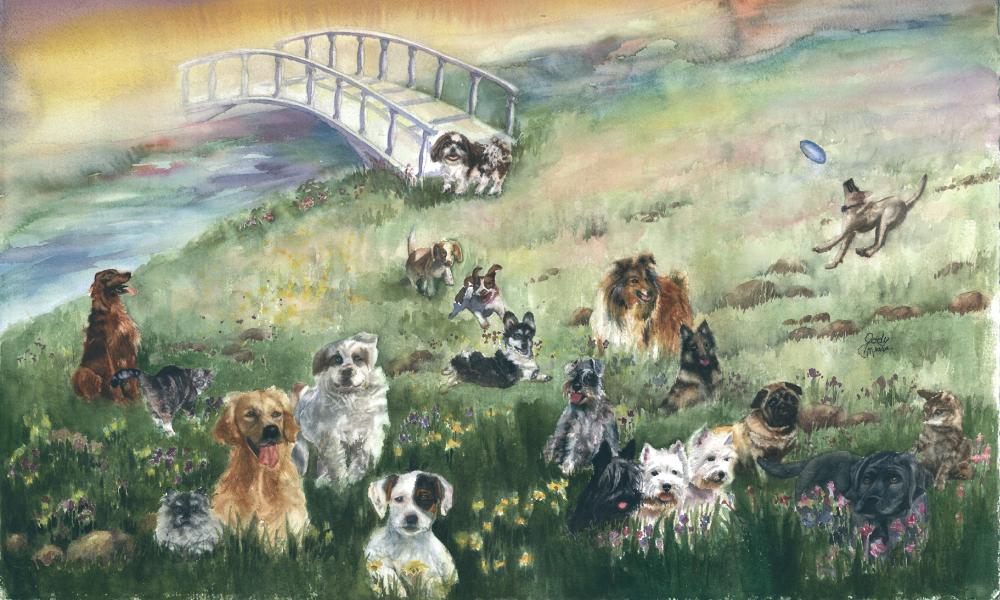 Dog Rainbow Bridge