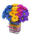 crazy daisies