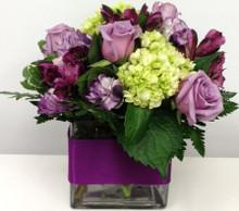 purple roses abilene tx