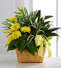 abilene tx flowers