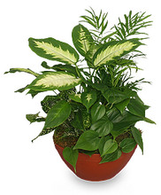 abilene plants