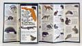 Florida's Mammals, Reptiles & Amphibians