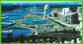 Chlorella Ponds