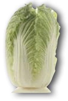 napa-cabbage.jpg