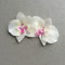Two Handpainted Silk Orchids