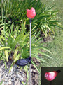 2-Pack Stainless Steel Red Cardinal White LED Solar Light