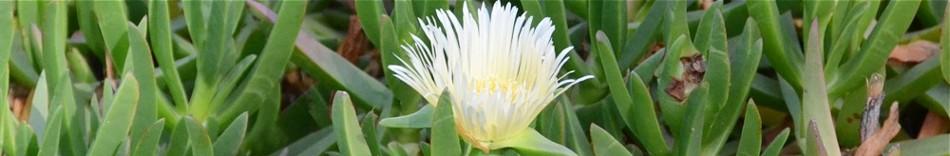 11-flower.jpg
