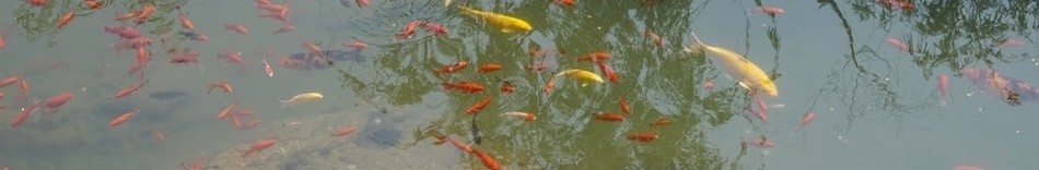 13-fishes.jpg
