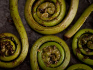Fiddlehead 1