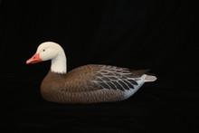 Snow Goose by Connie Tveten