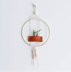 "Air Plant Wall Hanging- 6"" Ring"