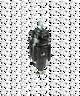 """Bellofram Type 51 FR Filter-Regulator, 1/4"""" NPT, 0-100 PSI, 960-177-000"""