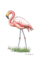 Flamingo No Hat