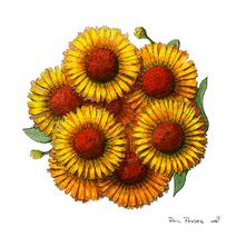 Flower Small Daisy