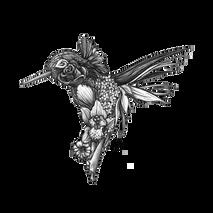 DS - Hummingbird (8x10)