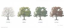 Tree - 4 Seasons