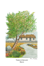 Trees of Ireland - Birch