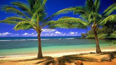 Palm Tree Smoothie Nicotine Juice