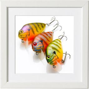 Sunfish Amigos