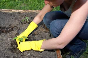 protect plants in early growing season