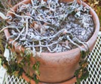 frost-on-plant1.jpg
