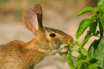 protect plants from rabbits and other pests
