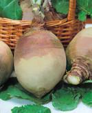 Turnip Swede Marian