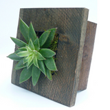 Mini Grovert Wall Planter - Gray