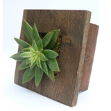 Mini Grovert Wall Planter - Brown