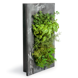 Grovert Wall Planter- Chalkboard