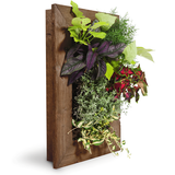 Grovert Wall Planter- Ghostwood