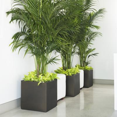 Crescent Garden Pandora Resin Planter