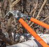 Cedar Lopper cuts Upside down
